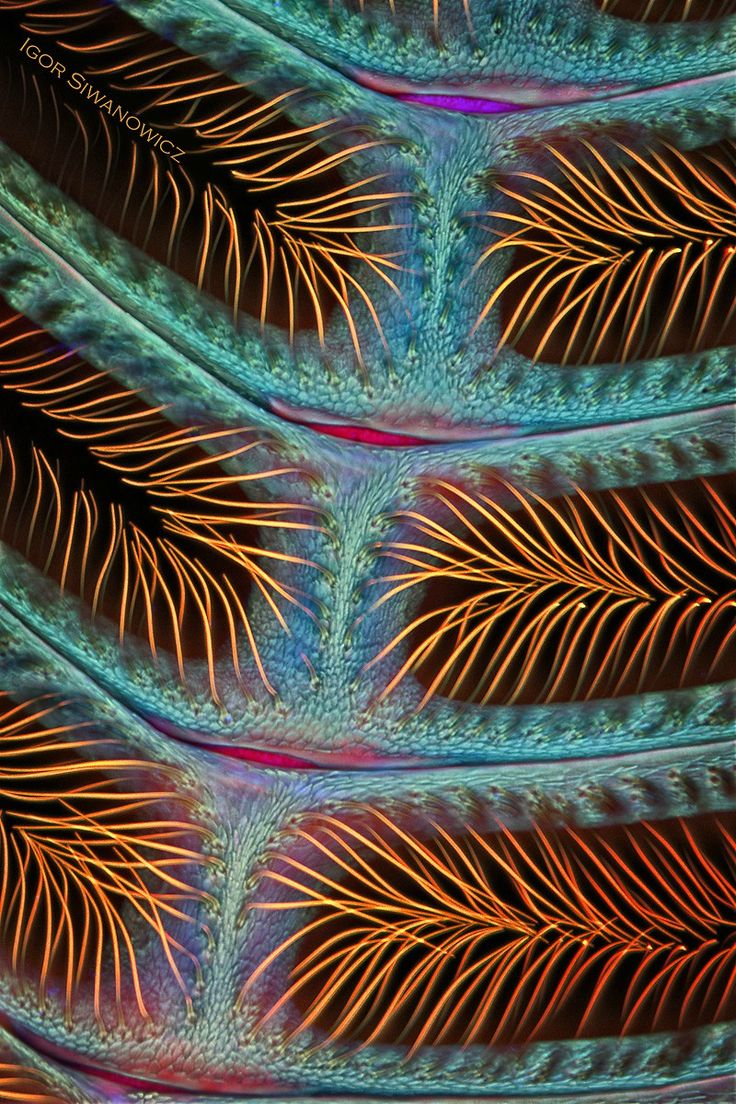 The Extraordinary Details of Tiny Creatures Captured with a Laser-Scanning Microscope by Igor Siwanowicz | Colossal