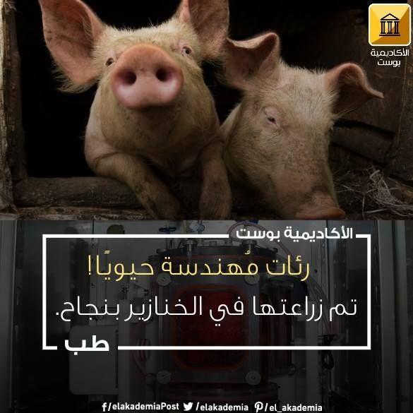 زرع رئات تم إنمائها معمليا داخل الخنازير بنجاح قد نجت الرئات بدون أي تعقيدات في الحيوانات لمدة تزيد عن الشهرين قد تمت عملية الزرع لأول مرة على ا Animals Pig
