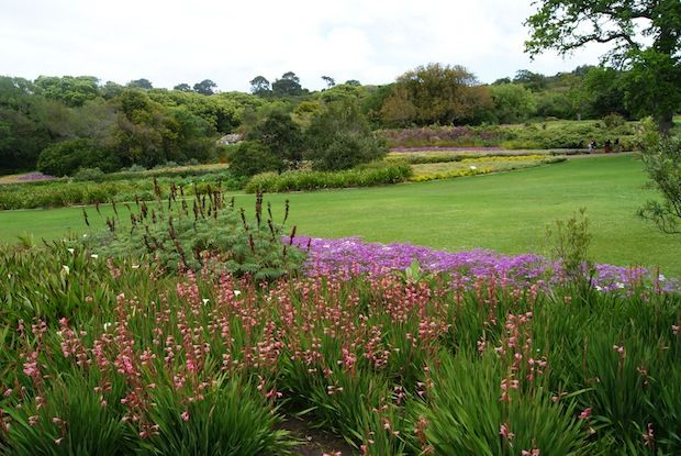 Kirstenbosch National Botanic Garden in Cape Town, South Africa; an UNESCO World Heritage site