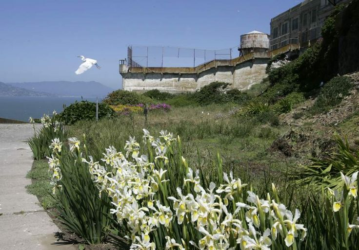 On Alcatraz, the island's erstwhile prison gardens are still in bloom