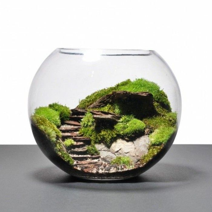 Over 40 suggestions on how to build a terrarium yourself