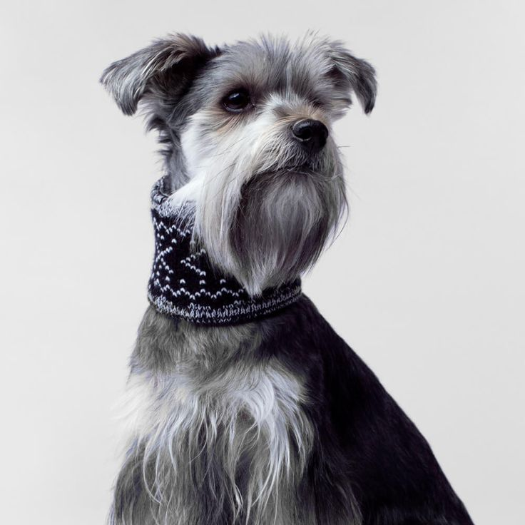 Canada Pooch Dog Scarf | The Black Pepper Cowl scarf adds a stylish touch to every Fall outfit with the Canada Pooch Scarf Collection