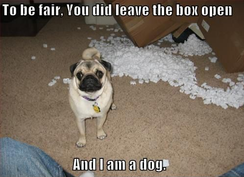 Funny: Funny Dogs, Funny Pugs, Funny Pictures, Puppys, Dogs Humor, Dogs Pictures, Dogs Funny, True Stories, Animal