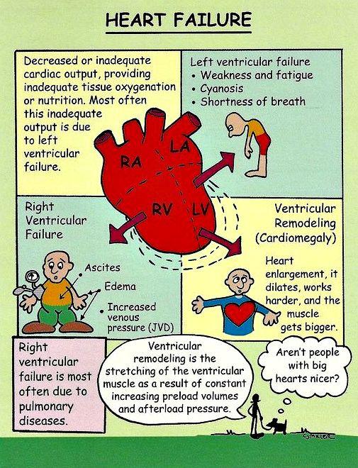 7 best Med images on Pinterest Nursing, Nursing students and Knowledge