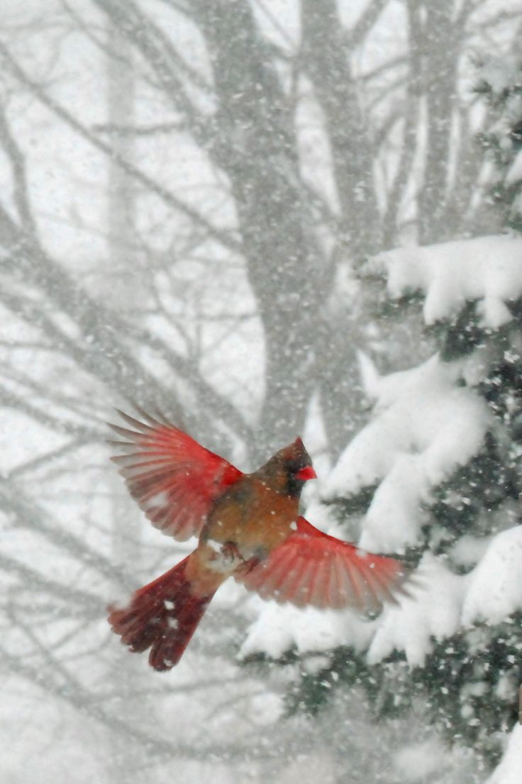 A photo from my back yard during an Ohio winter.