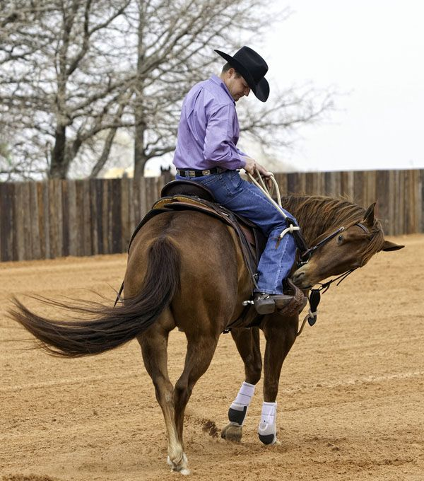 If you feel your horse even thinking about genuine bucking, do a one-rein stop to prevent it. Once you've got him stopped, get off and go right to work moving his feet from the ground.