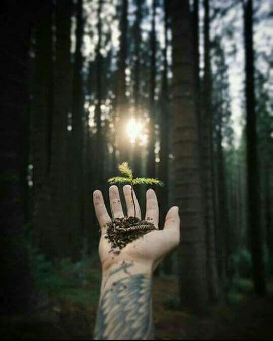 Somos parte del bosque milenario en nosotros habita la luz, el día y la noche tenemos la bondad de la vida y la fortaleza del infinito universo.