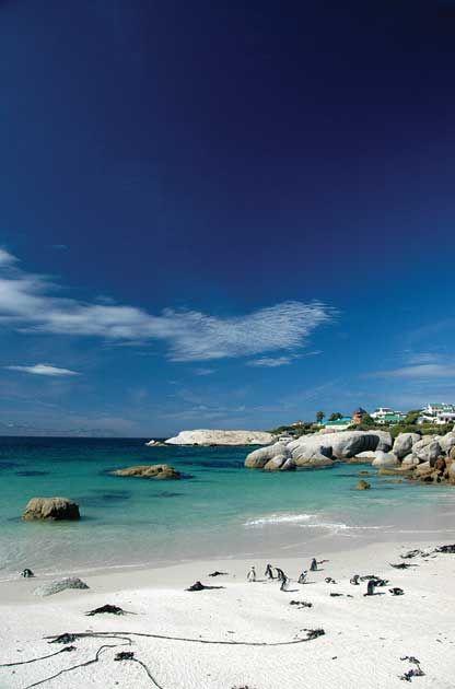 Penguins of Simon's Town #CapeCadogan #CapeCadoganTours #ExploreCapeTown #Simonstown #penguins