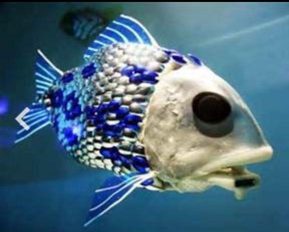 Weird deep sea creature rare sea creatures pinterest for Weird deep sea fish