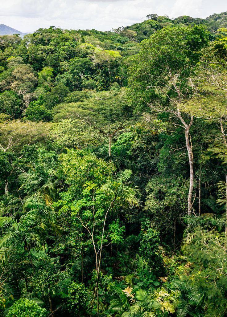 Photos du Panama - Jungle Gamboa