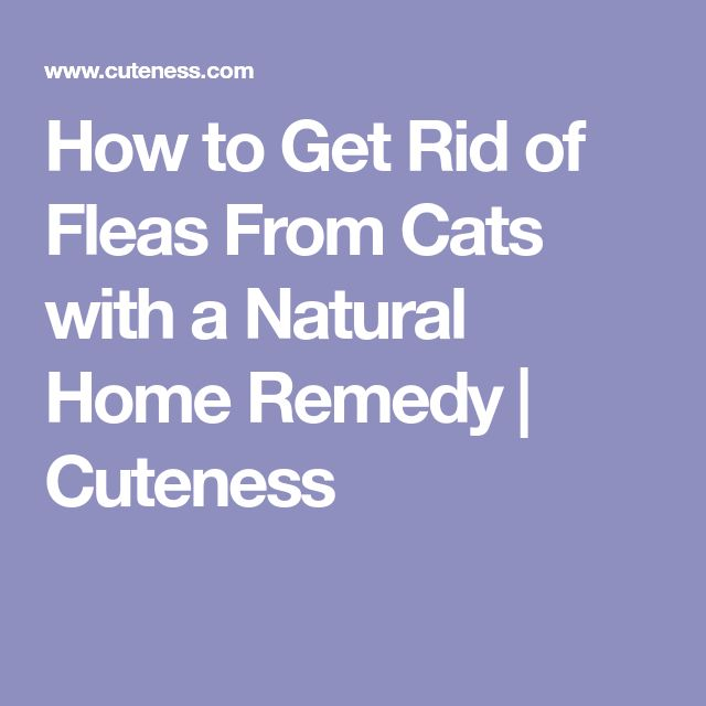 How to Get Rid of Fleas From Cats with a Natural Home Remedy | Cuteness