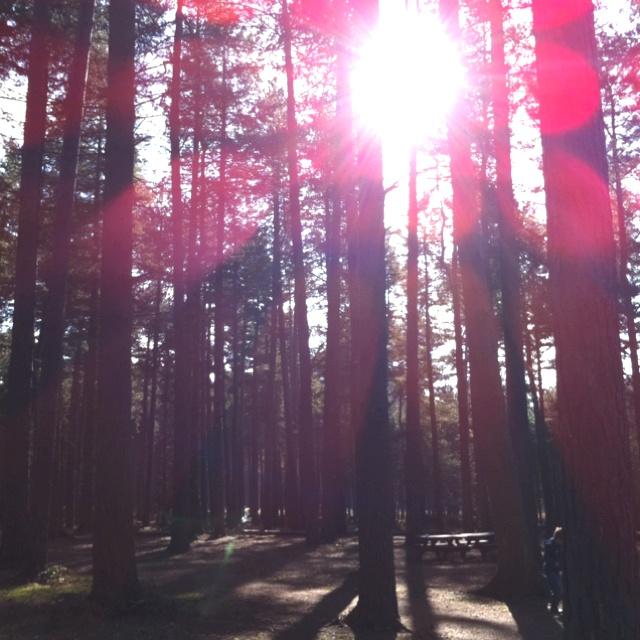 Sherwood Pines, Clipstone, Nottinghamshire.