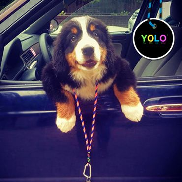 YOLO DOG! HAPPY WAVE! www.yoloshop.pl