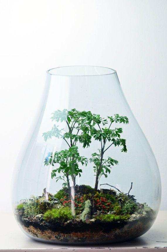 Forest Terrarium // live moss // lichen branches // large teardrop vase on Etsy, $400.00