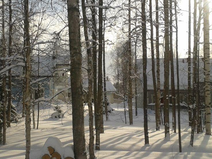 Forêt de bouleau - Lahti in Finland