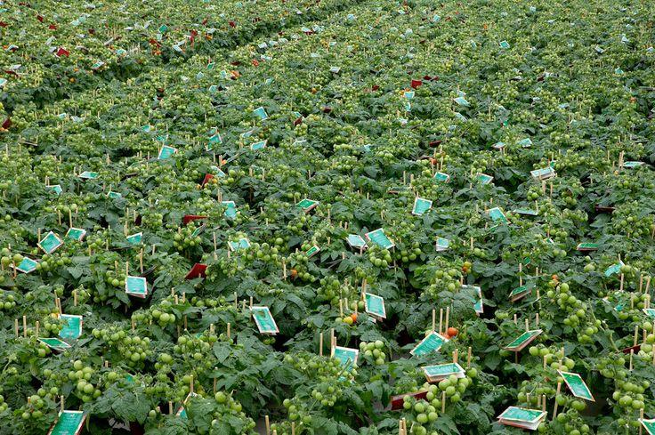 Welkom bij Plantenkwekerij Vreugdenhil