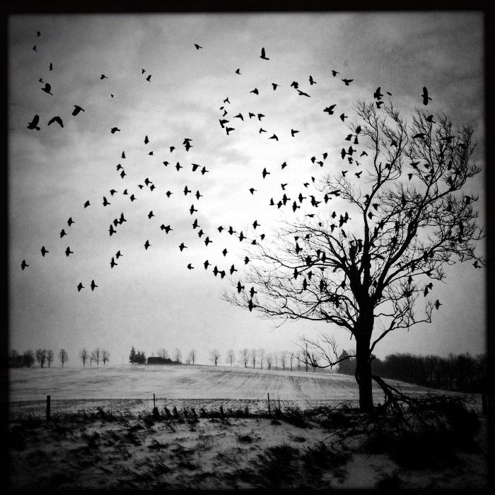 Dramatic tree photo birds flying photo nature photo black white landscape winter