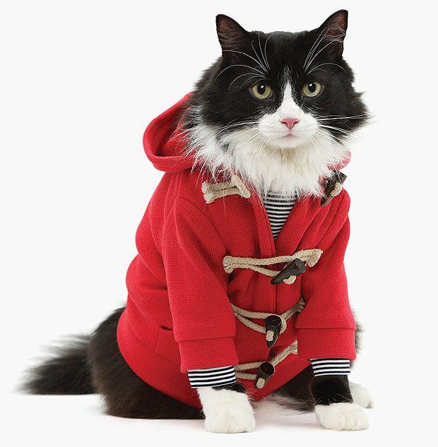 Cat In Hat Coat