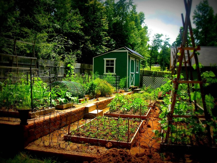 17 best images about terraced vegetable gardens on for Terrace vegetable garden