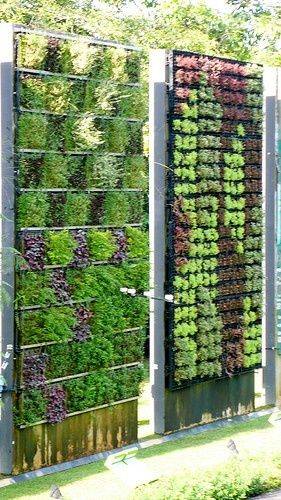 Wall Gardening With mesh and wiring. Wall gardens are a perfect solution for minimal space like patios and tiny backyards. The living walls offers salad fixings along with creative, eye-catching conversations pieces. It is also a great idea for elderly gardeners or those with physical limitations where bending over and kneeling is virtually impossible. This system puts little to no stress on the back and knees and is simple enough for children to water and mist.