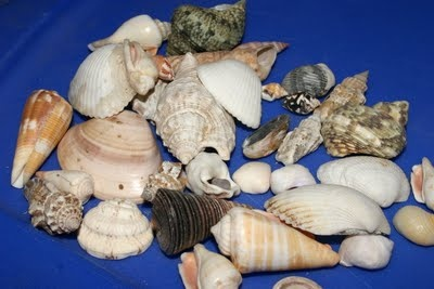 {Shell Crafts}  Neat! #Ocean #UnderTheSea #CampSunnyPatch