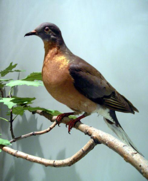 100 Recently Extinct Animals: 10 Recently Extinct Birds