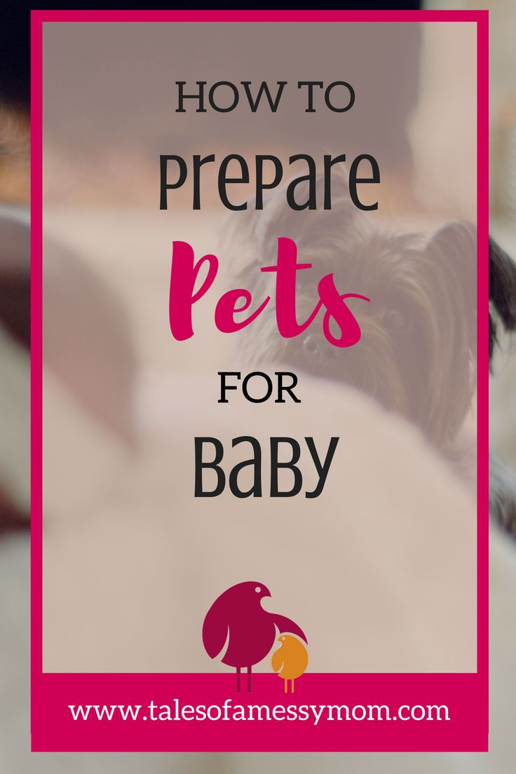 Create a safe and happy environment for the whole family by preparing your pets for baby. Here is how we prepared our dogs and cats. http://www.talesofamessymom.com