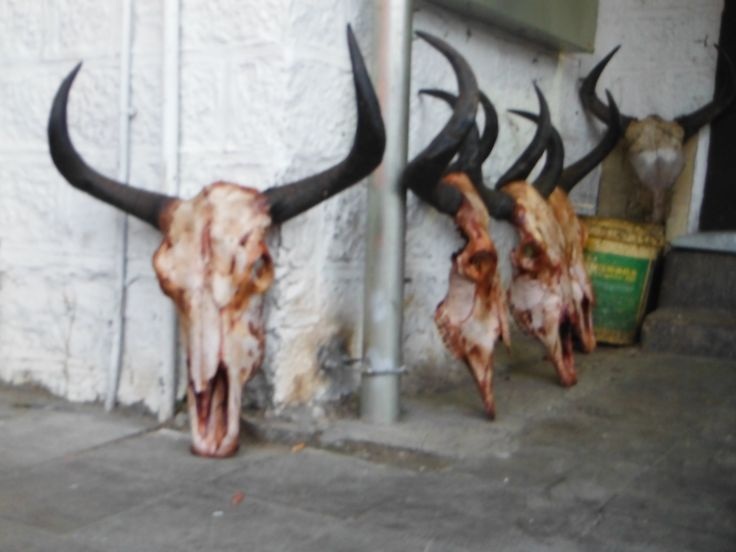 The butchers in Lhasa, Tibet. The place to go for your Yak meat.