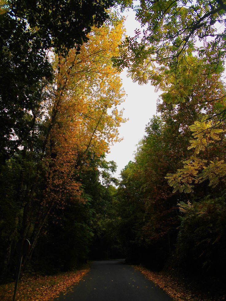 Primeros colores del otoño. Camino del Monasterio de San Pedro de Alcántara.
