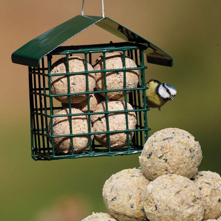 211 best bird food images on pinterest bird food bird for How to make suet balls for bird feeders