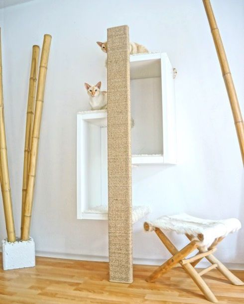 die besten 25 katzen kletterwand ideen auf pinterest katzen kletterger st freig nger lauf. Black Bedroom Furniture Sets. Home Design Ideas