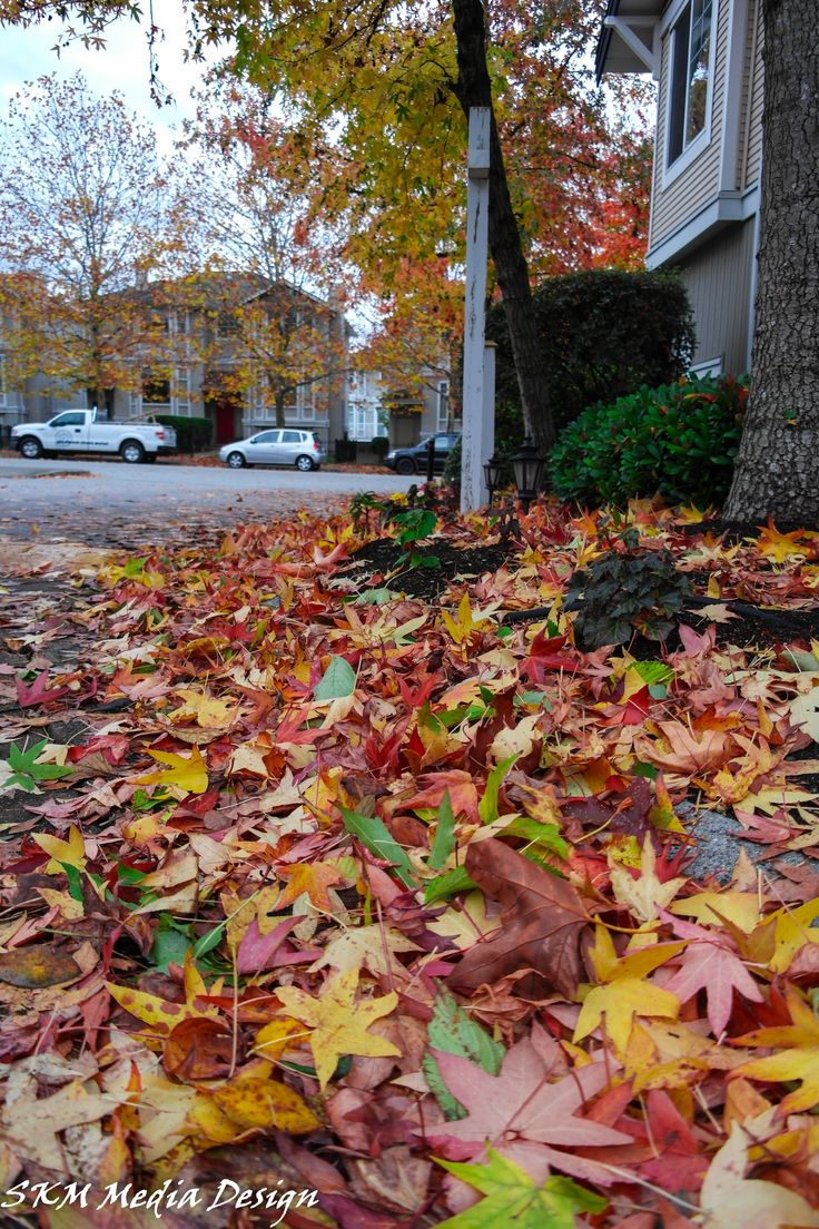 Colored drive way #fall #autumn #leaves #fallenleaves #red #green #yellow #rainbow #winteriscomming #colours #garden #lookdown #peaceful #beauty #skmmediadesign