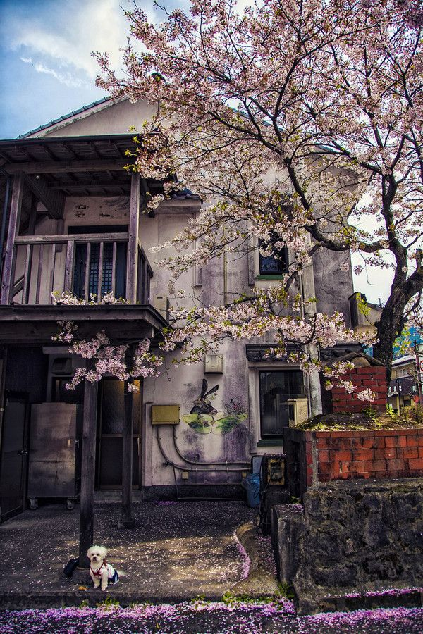 Cherry Blossom house in Kyushu, Japan | by Hanson Mao on 500px