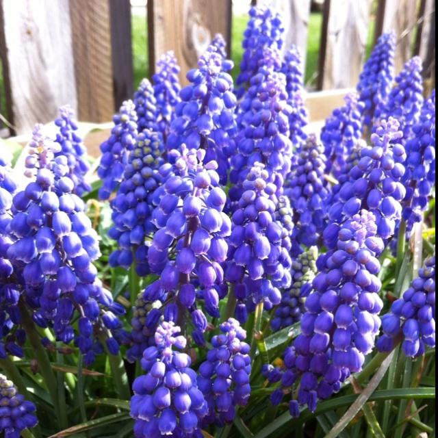 These bring me joy!Joy, Colors, Mood, Gardens, Bring