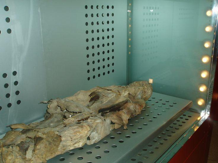 Archivo:Momia guanche museo santa cruz 27-07