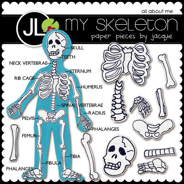 88 best skeletal system - bones images on pinterest | halloween, Skeleton