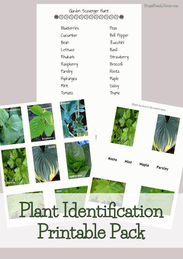 Free Plant Identification Printable Pack - Money Saving Mom®