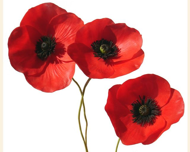 201 best amapolas images on pinterest red poppies poppies and perfect tutorial for any poppy lovers paper fimo or what ever amapola poppy tutorial mightylinksfo