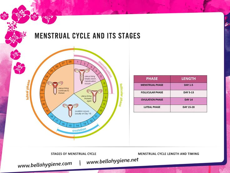 Menstrual Cycle And Its Stages