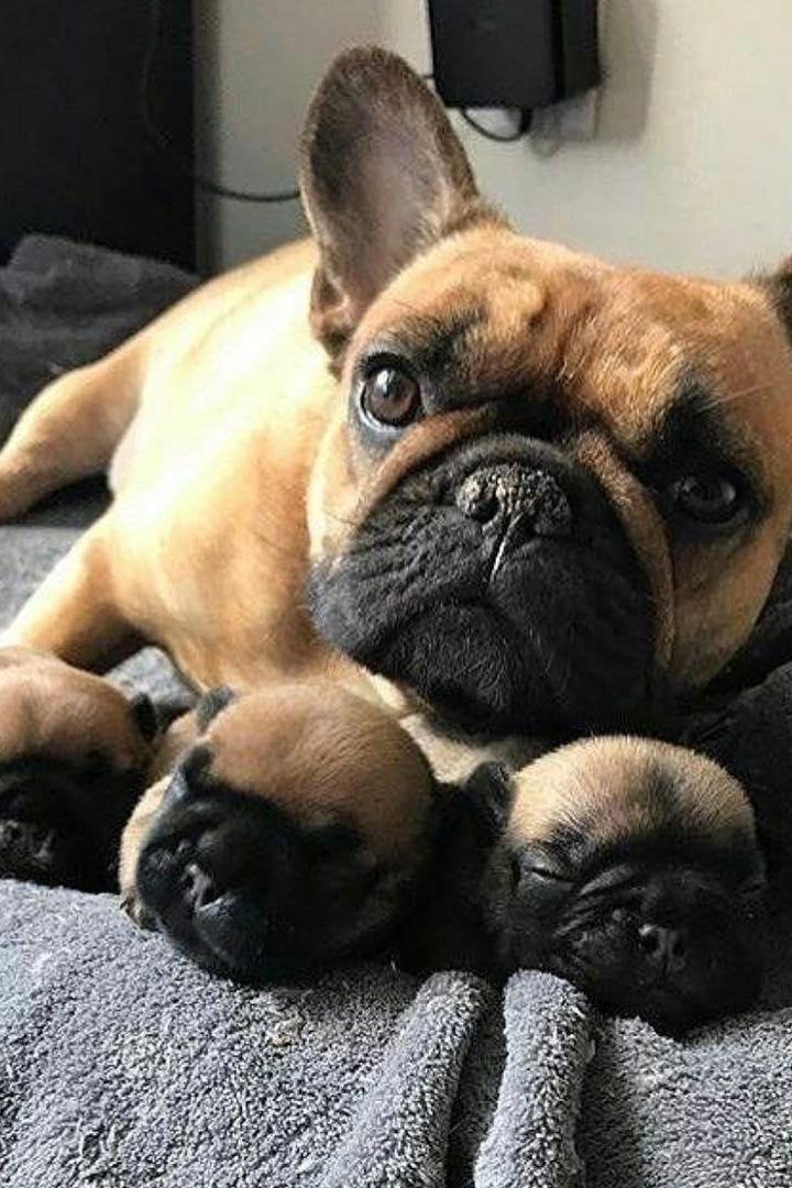 Dogs Of The World Dogintelligencerank Dogkeepslickingpaw Doggif