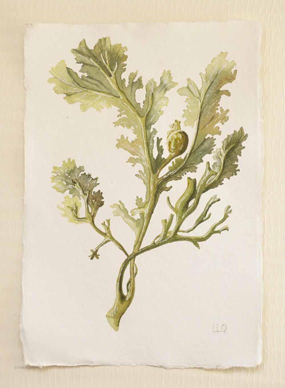 Seaweed original watercolour painting illustration green weed
