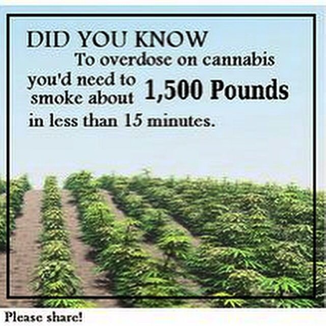 184 best images about Cannabis Facts, Quotes, News & Articles on ...