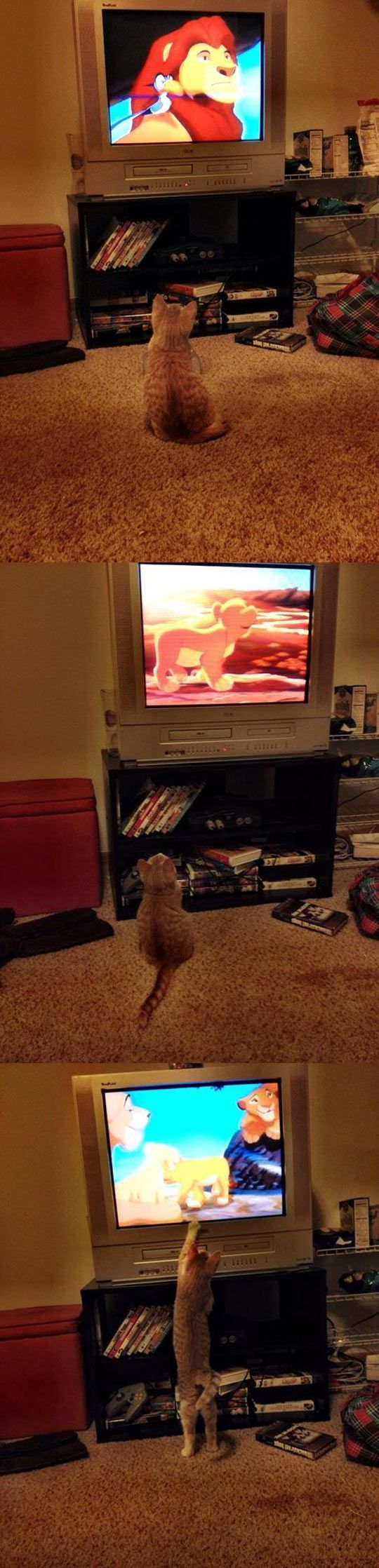 Everyone loves The Lion King…