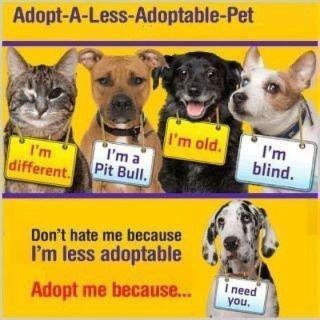 Don't shop, adopt!  Rescue a homeless pet instead of buying one at the pet store or breeder.