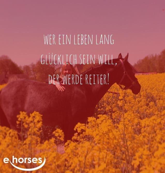 www.ehorses.de #ehorses_official