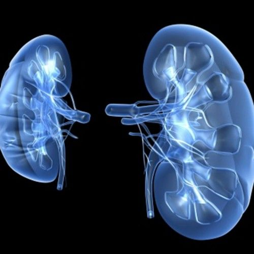 Simple and Effective Home Remedies For Kidney Infection