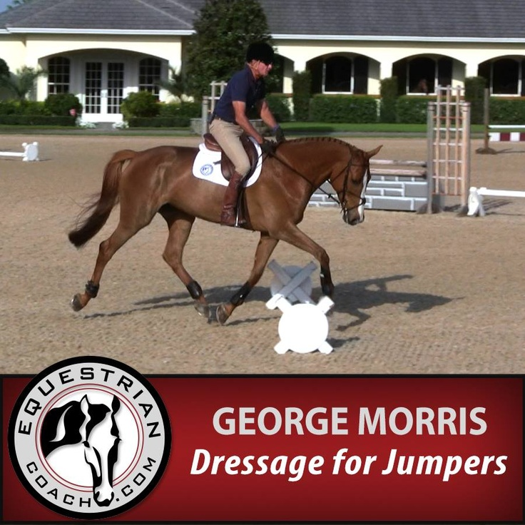 Don't forget you can receive a 10% discount to EquestrianCoach.com by using the promo code judge-my-ride at checkout.