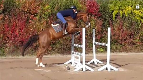 Pferde zu verkaufen: Lucie