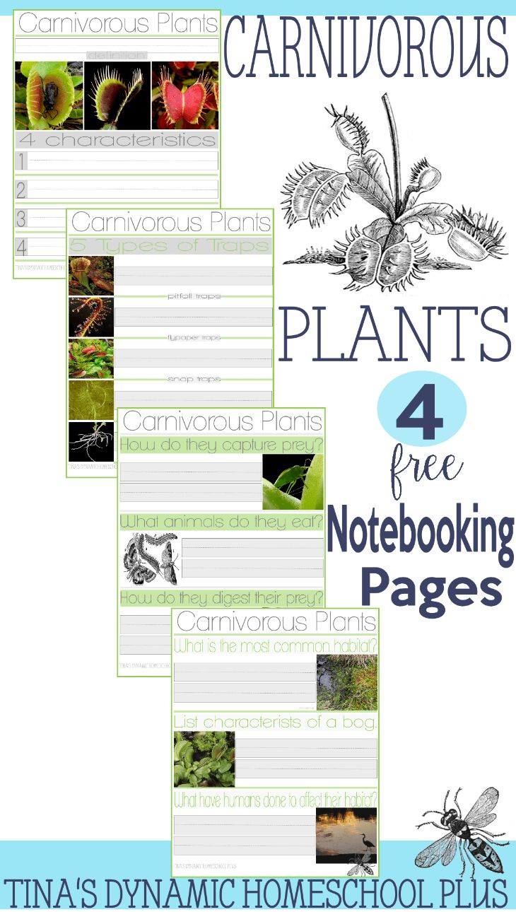 FREE Plants Notebooking Pages