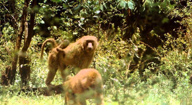 Africa Salvaje ! Un documental de Africa ! Animales y Tribus Exelente !